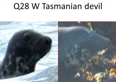 Seal identified on POLPIP survey