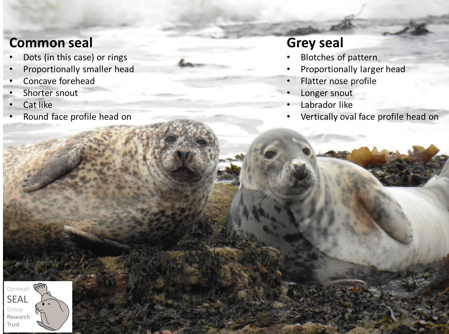 how to get a comoon seal in queensland