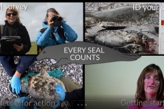 Every seal counts