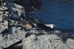 Relaxed seals enjoying awesome lockdown weather one of whom we have known since 2002